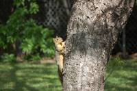 Squirrel Climbing