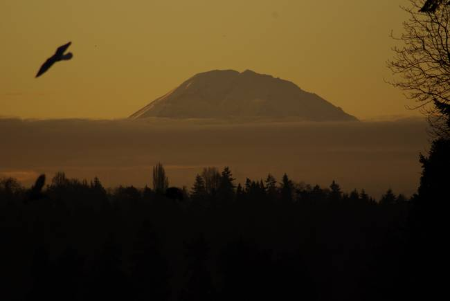 Mt. Rainier at Dawn, from the UW campus.