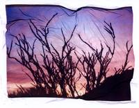 Ocotillo at Sunset