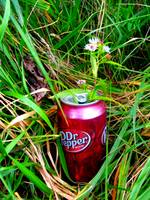 Pop Can Flower
