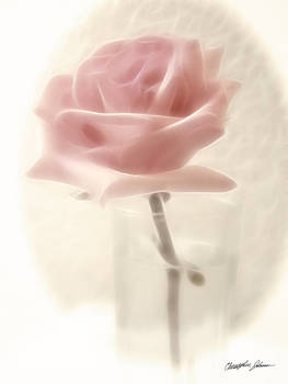 Pink Rose Impression by Christopher Johnson