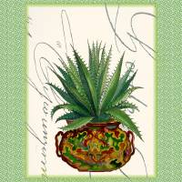 Cactus Art Print by Ricki Mountain