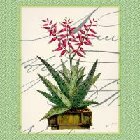 Cactus Art Print I by Ricki Mountain