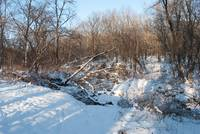 fallen trees over a frozen creek