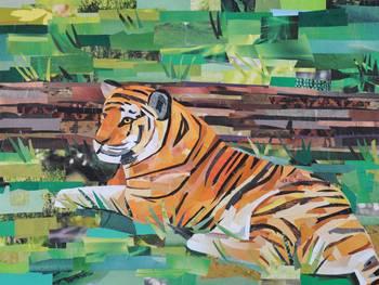 Tiger By Megan Coyle