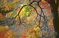 A Tree Silhouettes A Wall Of Color