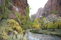 The Virgin River, Zion National Park