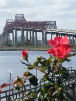 Roses At The Matthews Bridge Jacksonville Fl