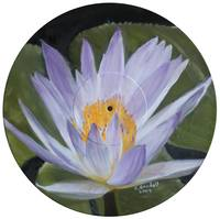 Water Lily on Vinyl Record