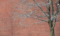 Red Brick Snowy Branches