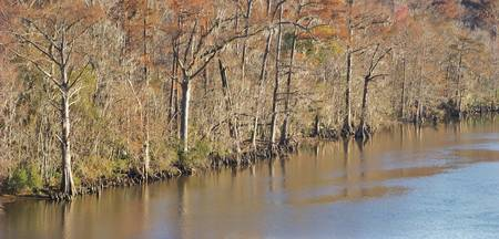 Sabine River Cypress 6602