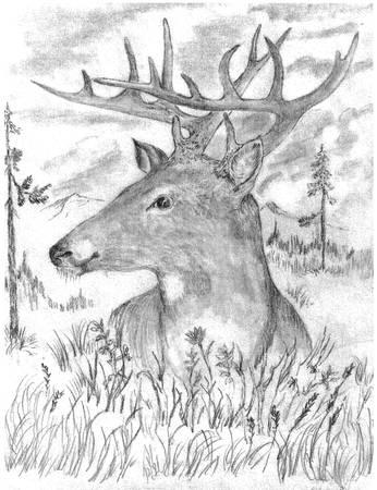 Deer Drawing 2 - Deer by Barney Hedrick