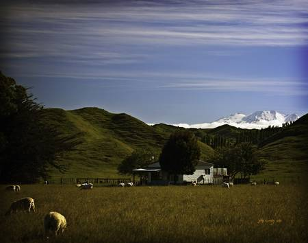 New Zealand sheep and mountain landscape