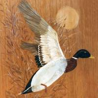 Mallard Art Prints & Posters by Anne Marie Sole