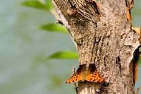 Butterfly on Tree