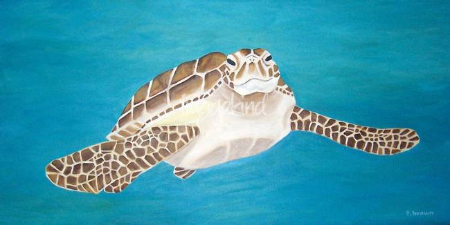 sea turtle - toby