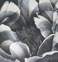 Peony - black and white study