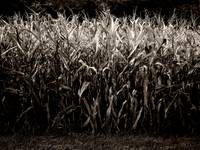 The Cornfield Revisited