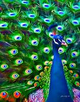 Peacock Art No8
