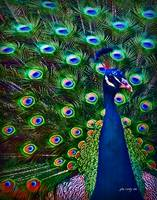 Peacock Art No9