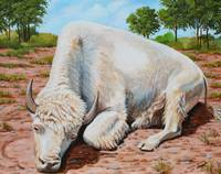 Young White Bison