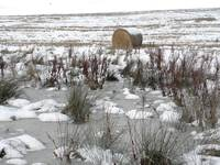 Wheat field - with hay roll, snow, ice .....
