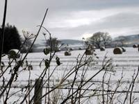 Xmas snow on farmland