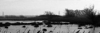 Bleak day in the fen
