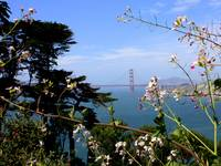 Golden Gate Bridge with Flowers by Carol Groenen