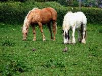 Rescued Horses Out To Pasture