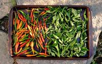 peppers & kaffir leaves