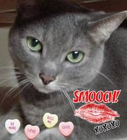Valentine's Day Gray Cat