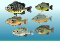 Sunfish Group