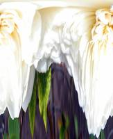 White Rose Abstract