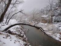 Zion Snowy Creek