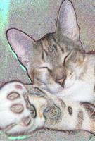 Sleeping Kitty Art