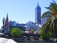 Palm tree, Yarra River and Downtown Melbourne