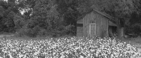 Cotton Shack