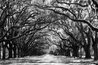 Sunny Southern Day - Black and White by Carol Groenen