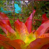 """""""Giant Bromeliad"""" by scottkwimer"""