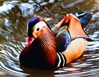Mandarin Duck Digital Watercolor