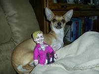 Hillary's top Chihuahua!