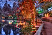 Lights Along the Comal River