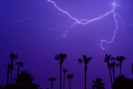 Spider Lightning and Palm Trees
