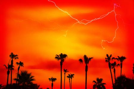 Sunset Palm Trees and Lightning Striking