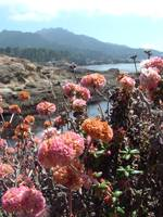 Point Lobos with Flowers