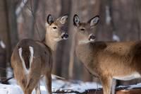 Two Very Curious by Daniel Teetor