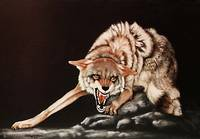 Coyote painting