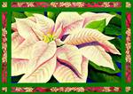 Pink & Cream Poinsettia