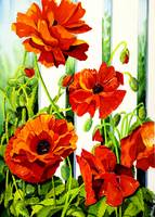 SPRING_POPPIES